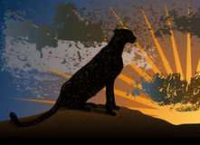 Cheetah on a sunset. Sitting cheetah on a hill against the background of sunset Stock Photography