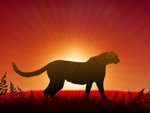 Cheetah on Sunset Background Royalty Free Stock Photos