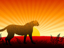 Cheetah on Sunset Background Royalty Free Stock Photo