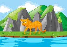 Cheetah walking along river. Illustration Stock Photography