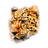 Cheetah Watercolor painting Art. On white background stock images