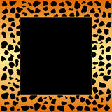 cheetahramfläckar Royaltyfri Bild