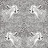 Cheetahs background vector illustration