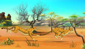 Cheetahs on the Hunt Stock Image