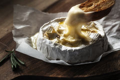 Cheezy camembert on a wodden board stock images