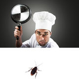 Chef attacking a cockroach Royalty Free Stock Images