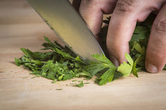 Chef chopping parsley leaves Stock Images