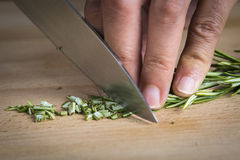 Chef chopping a rosemary branch Royalty Free Stock Image