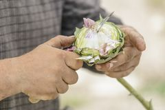 Chef cleaning artichoke Royalty Free Stock Images