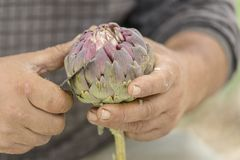 Chef cleaning artichoke Royalty Free Stock Photos