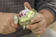 Chef cleaning artichoke Royalty Free Stock Image