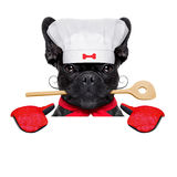 Chef cook dog Royalty Free Stock Images