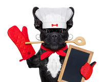 Chef cook dog Royalty Free Stock Image