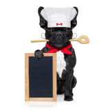 Chef cook dog. French bulldog dog chef cook holding a blank empty blackboard or placard, isolated on white background royalty free stock photo
