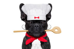 Chef cook dog Stock Images
