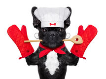 Chef cook dog Stock Photos
