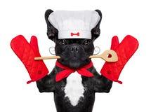 Chef cook dog Stock Photos