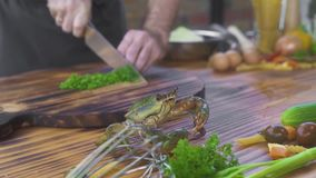 Chef cook preparing ingredient for cooking seafood in italian restaurant. Cook catching live crab for cooking in seafood stock footage