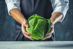 Chef cook preparing vegetables in his kitchen royalty free stock photo