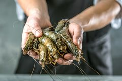 Chef cooking with Tiger prawn on dark background stock photo