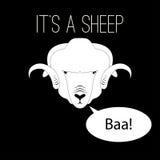 Chef de moutons disant le bêlement Photographie stock libre de droits