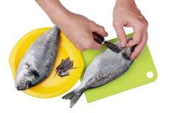 Chef des Restaurants schneidet Dornen und Flossen des Auslesemeeresfisches Stockfotografie