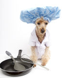 Chef Dog mit Pan Stockfotos