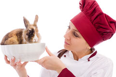 Chef with dwarf rabbit inside a bowl Royalty Free Stock Image