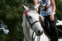 Chef et curseur de cheval Photo stock