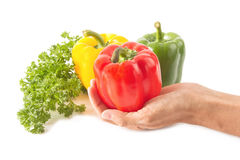 Chef hand and food ingredient Royalty Free Stock Photography