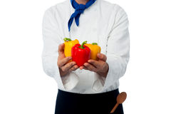 Chef hands showing fresh capsicums Stock Photo