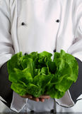 Chef Holding Fresh Butter Lettuce Royalty Free Stock Photo
