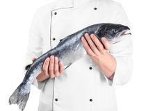 Chef holding fresh raw salmon, isolated on white. Chef holding fresh raw salmon, isolated Royalty Free Stock Photography