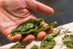 Chef is holding fried basil leaves. In the restaurants kitchen Royalty Free Stock Image
