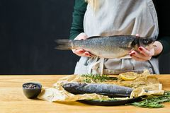 The chef is holding a sea bass. Black background, side view, space for text. stock photography