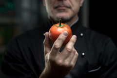 Chef holding a tomato. Confident elegant chef holding a delicious tomato on dark background Royalty Free Stock Image