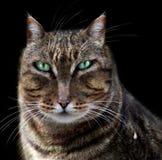 Chef- kat en melk royalty-vrije illustratie