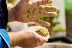 Chef-kok die Vegitabeles-stootkussens voor veganisthamburger maken stock foto's