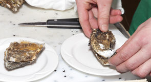 Chef is opening fresh oyster Stock Photo