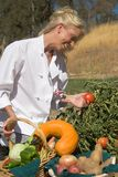 Chef Picking Tomato. Passive posed uniformed female Chef picking fresh tomato on vine in country outdoor garden setting Royalty Free Stock Photo