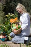 Chef Picking Vegetables. Passive posed uniformed female Chef inspecting fresh vegetables in country outdoor garden setting Royalty Free Stock Photos