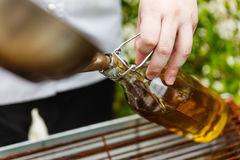 Chef Pouring Rosemary Oil From Pan dans la bouteille en verre photographie stock
