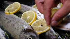 The chef prepares a trout for baking in the oven stock video footage