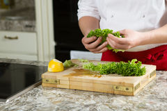 Chef preparing homemade salad in the kitchen stock images