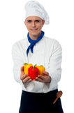 Chef showing fresh capsicums. Male chef in uniform holding capsicums Stock Photos
