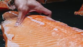 Chef takes out bones from the salmon fillet, cutting fish on slices for cooking sushi in 4k resolution in slow motion stock video
