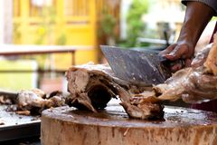 The chef is using a knife to cut the barbecued suckling pig.  stock image