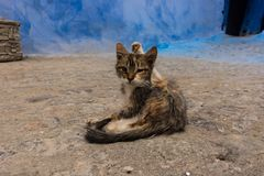 Lovely cat, sitting on the street royalty free stock photo