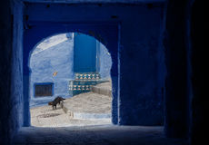 Chefchaouen - Blue village in Morocco Stock Photos
