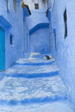 Chefchaouen Cat Royalty Free Stock Photography